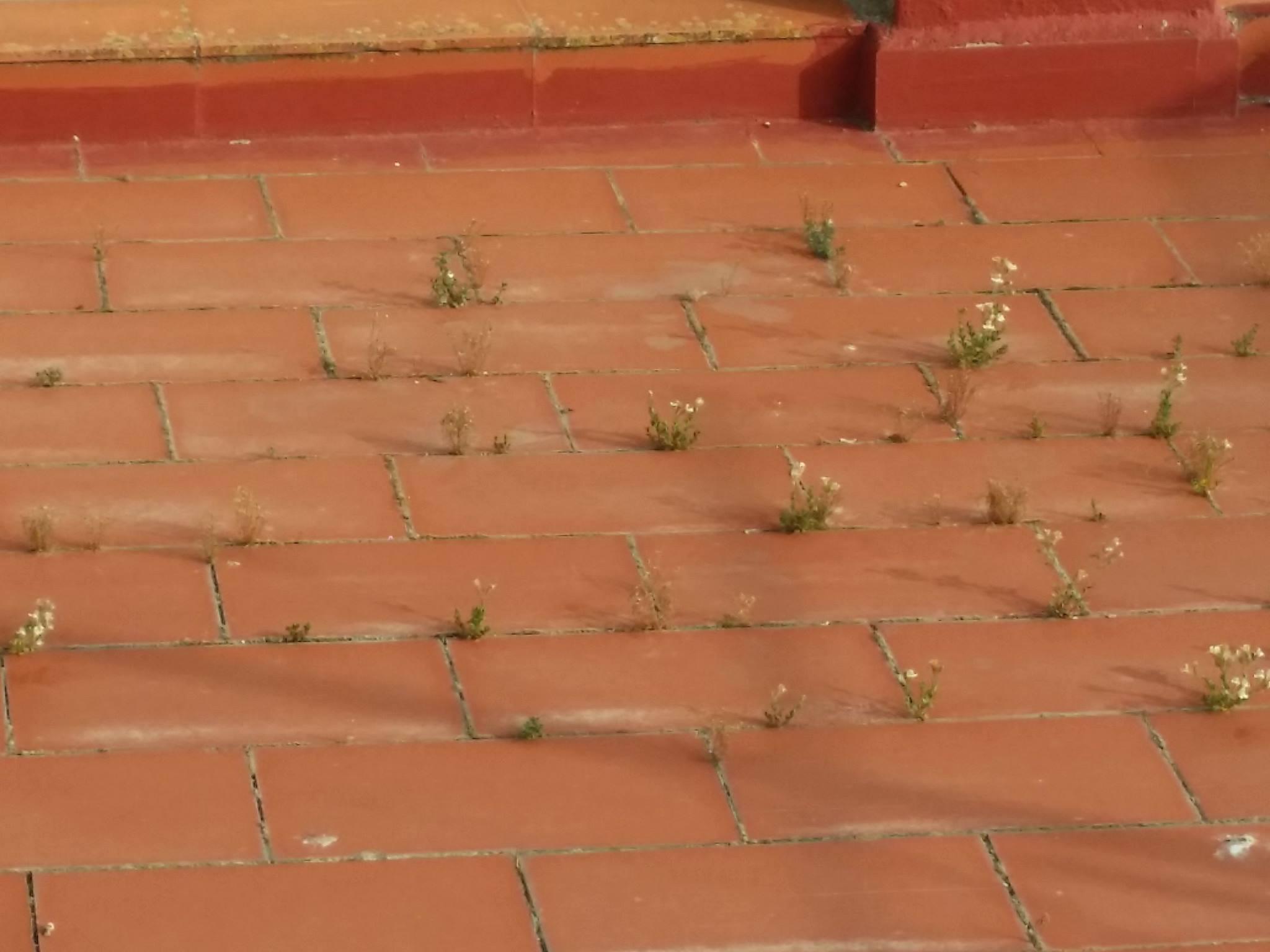 Plantas e impermeabilizacion