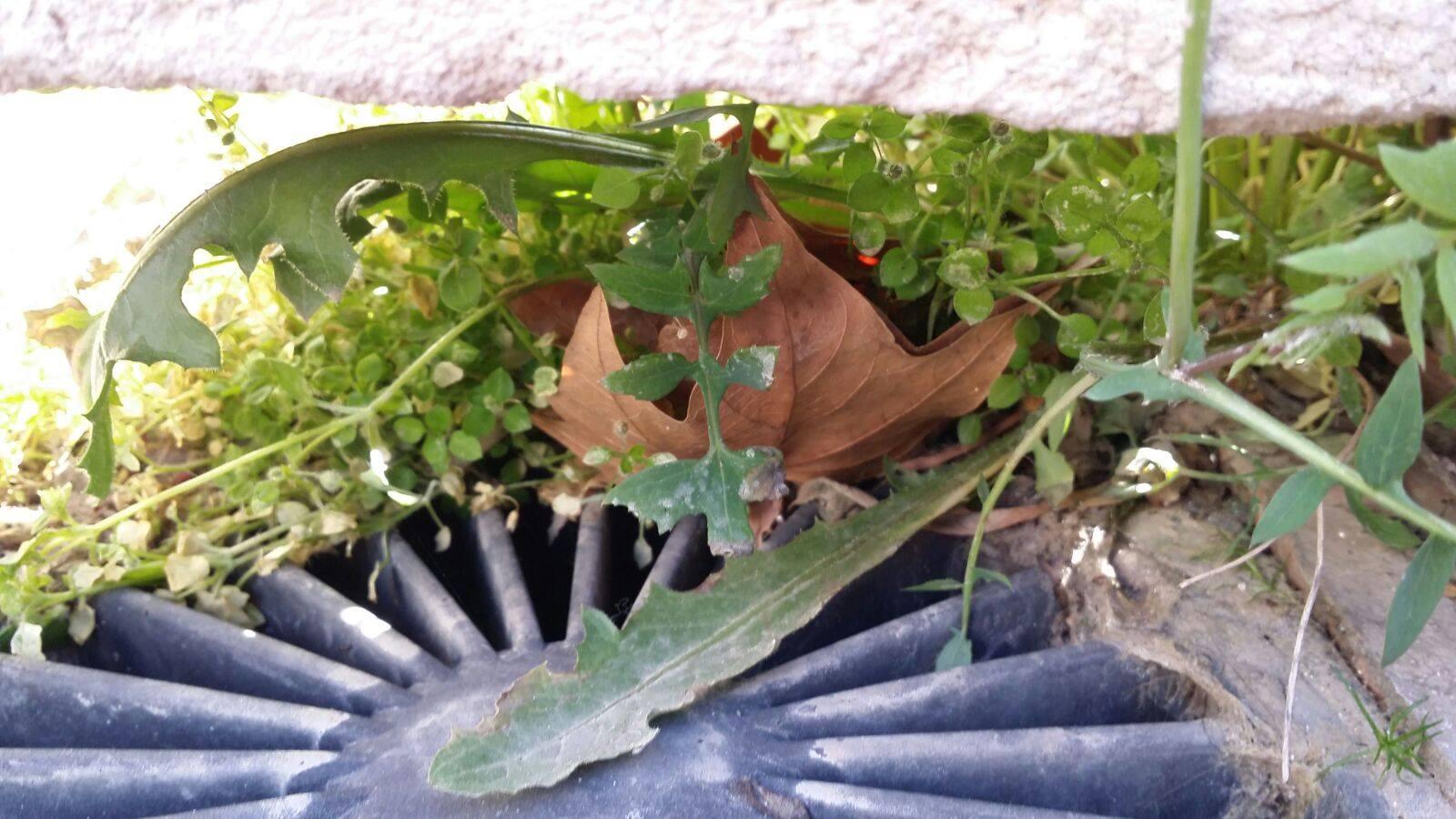 Limpieza y reparación de sumidero en el patio de una vivienda